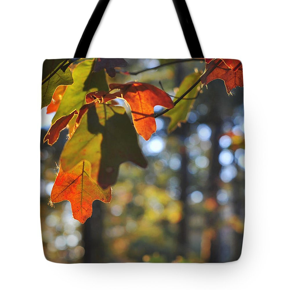 Terry D Photography Tote Bag featuring the photograph The Colors Of Fall by Terry DeLuco