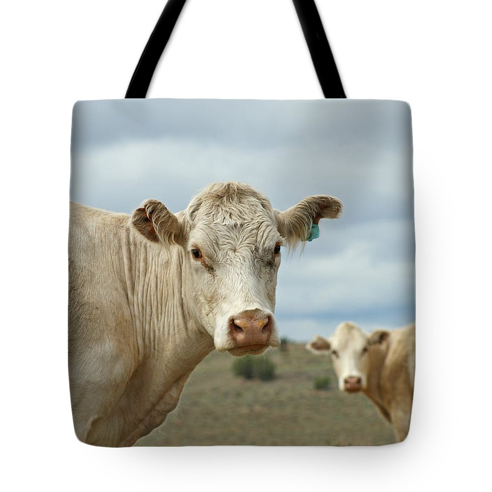 Cow Tote Bag featuring the photograph The Cows by Ernie Echols