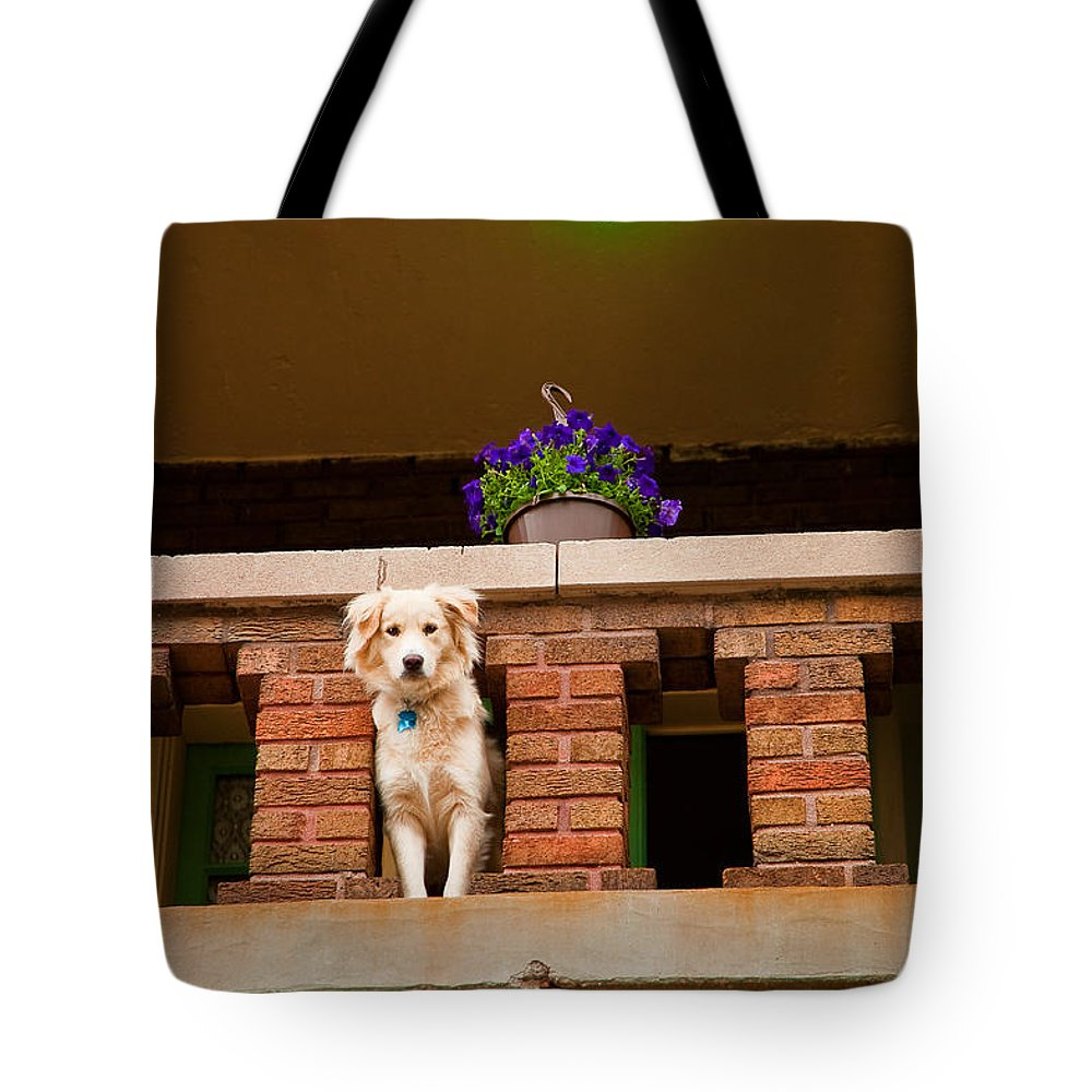 Dog Tote Bag featuring the photograph The Critic by Kristi Swift