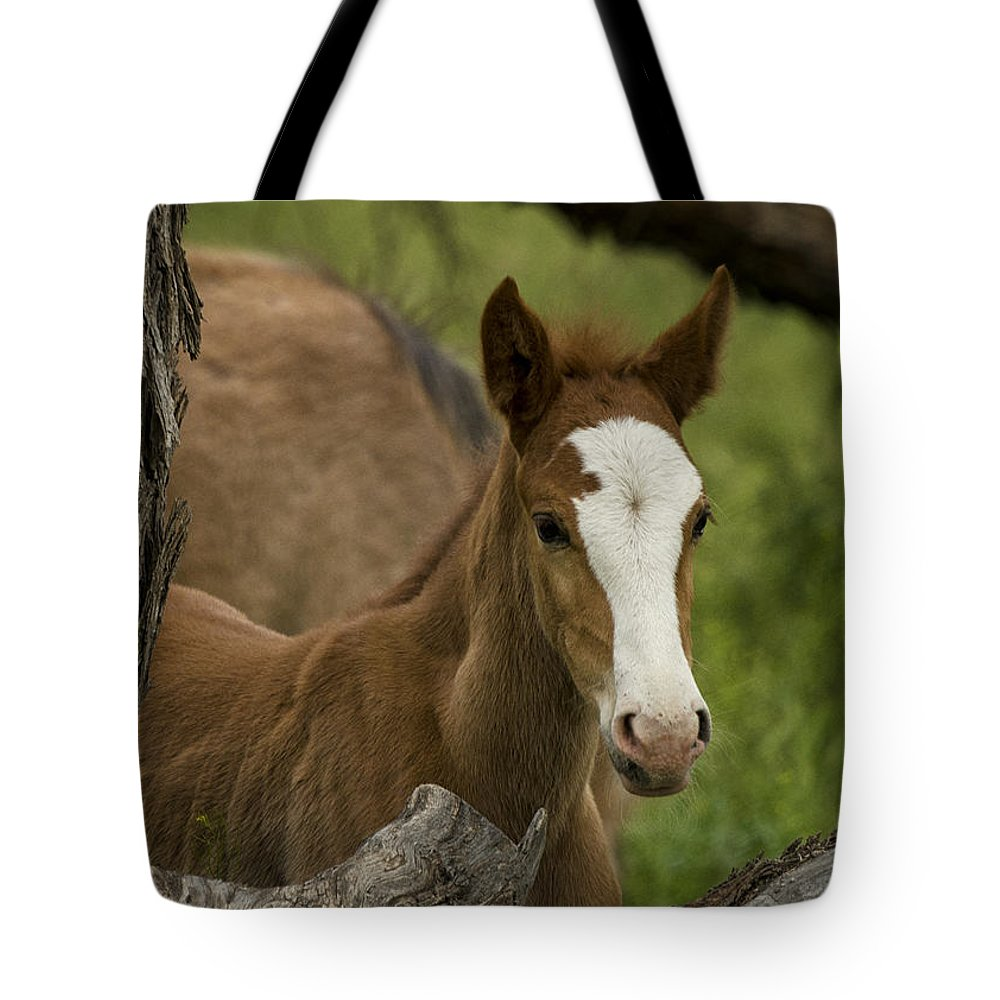 Wild Horses Tote Bag featuring the photograph The Curious Colt by Saija Lehtonen
