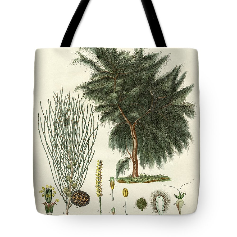 Bertuch Tote Bag featuring the drawing The Four-flapped Casuarina by Splendid Art Prints