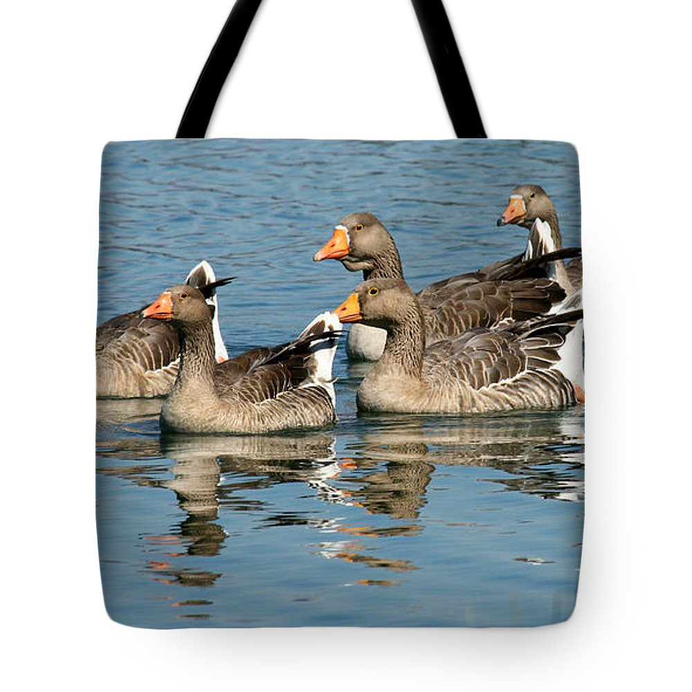 Geese Swimming Tote Bag featuring the photograph The Gang's All Here by Bob and Jan Shriner