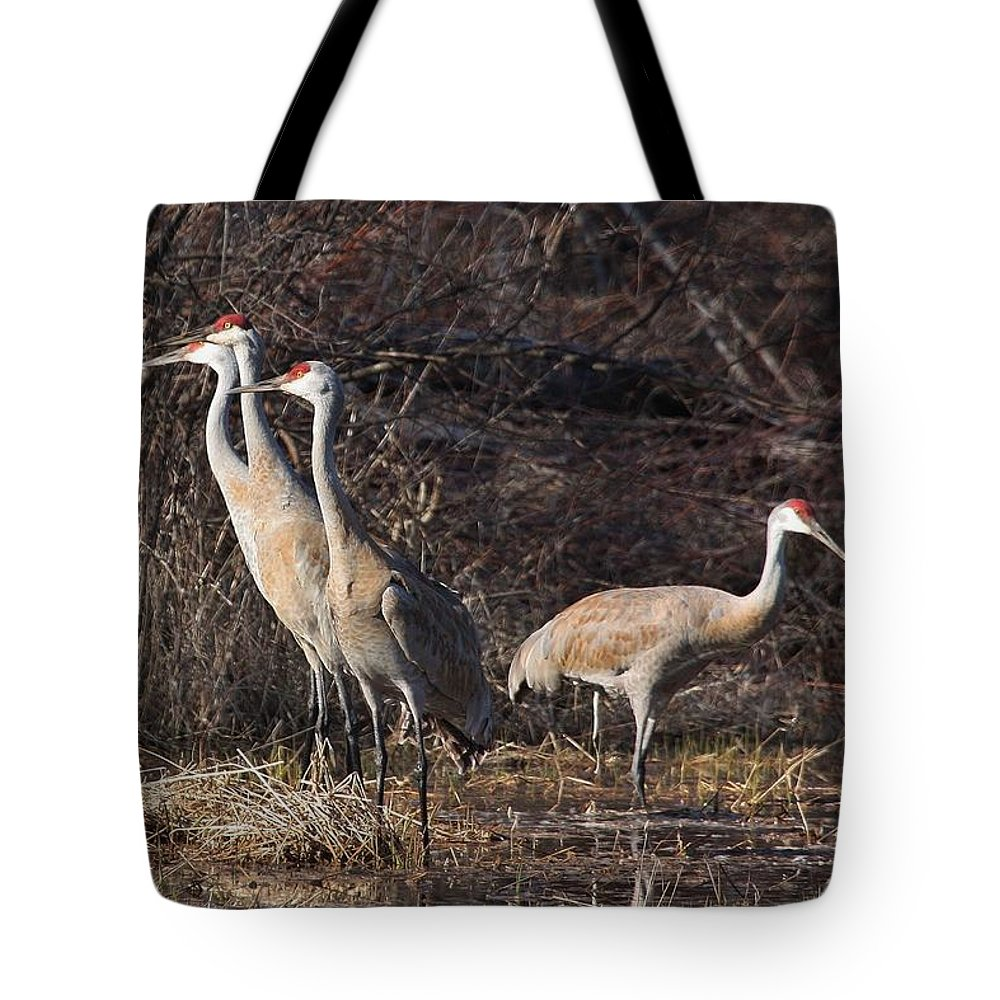 Sandhill Cranes Tote Bag featuring the photograph The Gathering...sandhill Cranes by Teresa McGill