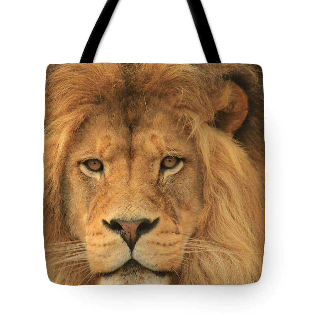 Lion Tote Bag featuring the photograph The Glory Of A King by Laddie Halupa