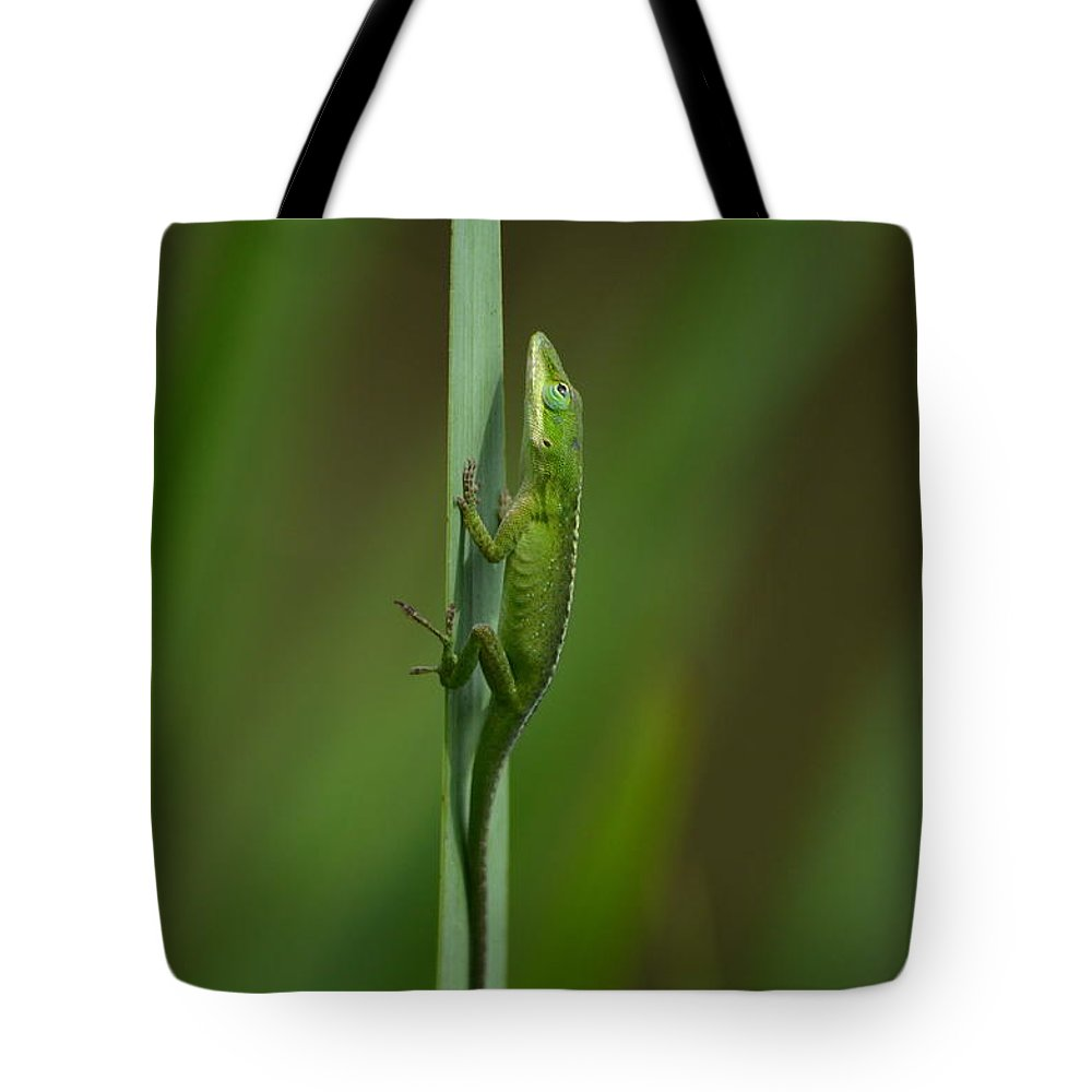 Lizard Tote Bag featuring the photograph The Green Mile by Kathy Gibbons