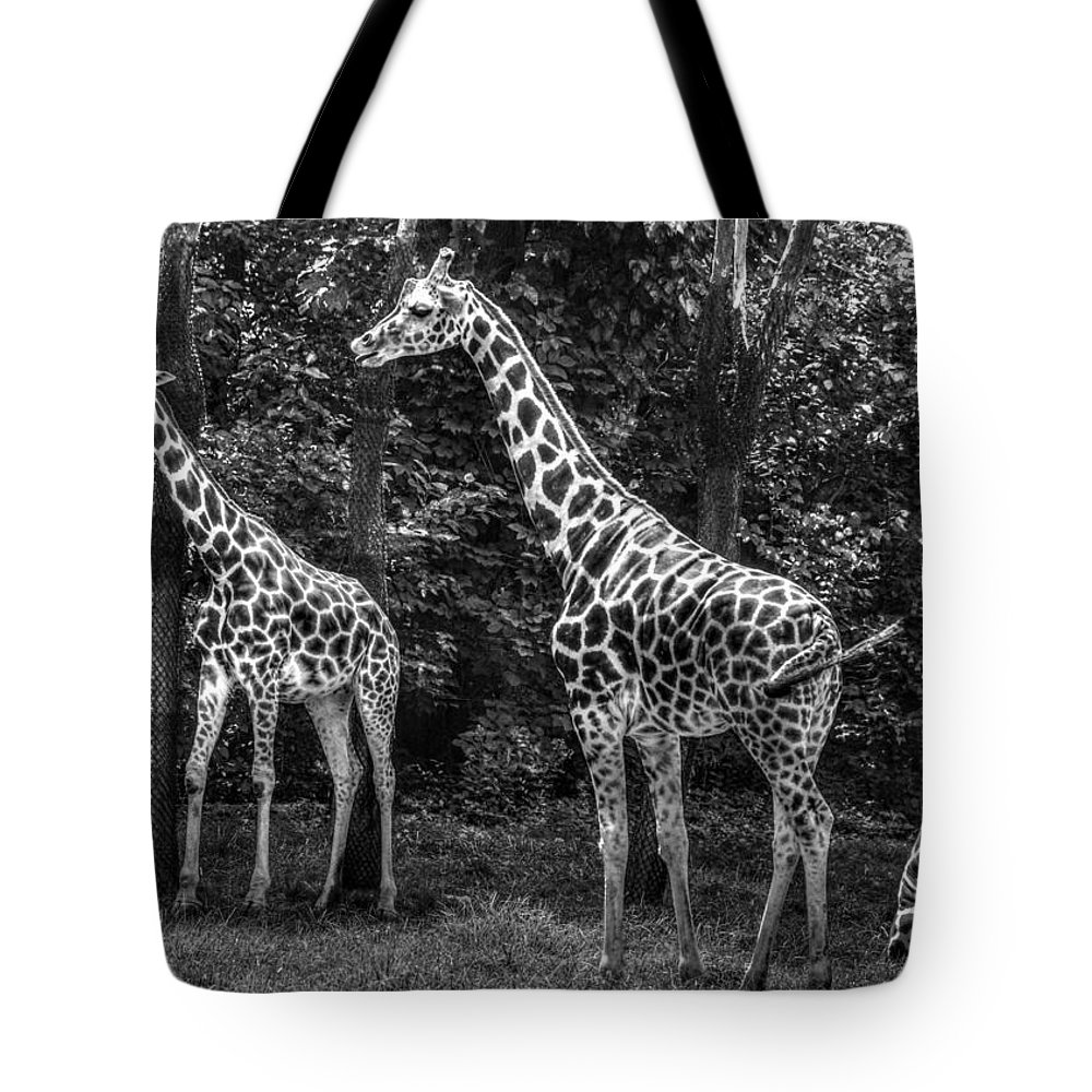 Giraffe Tote Bag featuring the photograph The Higherups by Jeff Watts