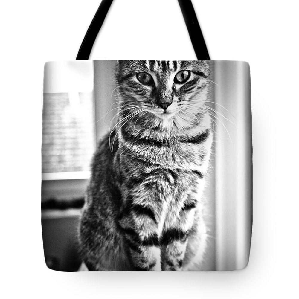 Kitten Tote Bag featuring the photograph The Hypnotist by Brothers Beerens