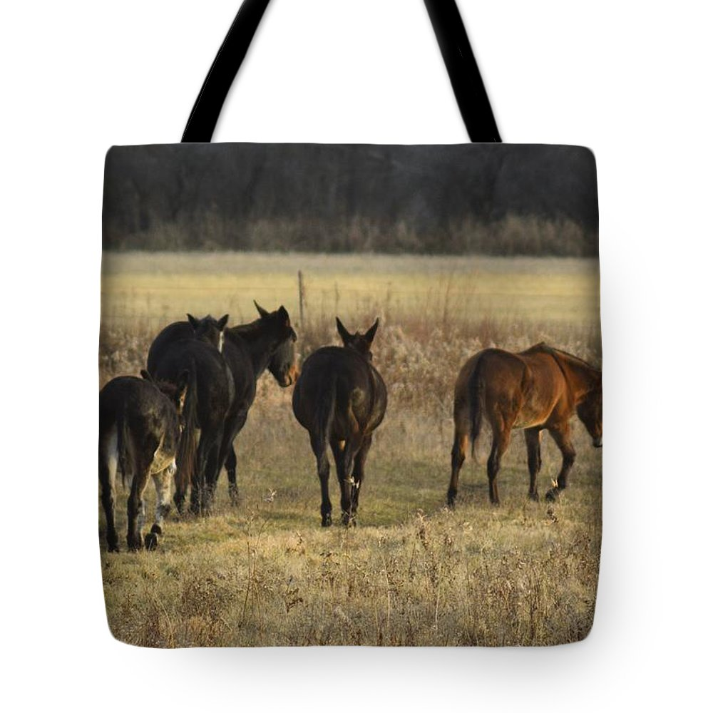 Jackass Tote Bag featuring the photograph The Jackasses by Bonfire Photography
