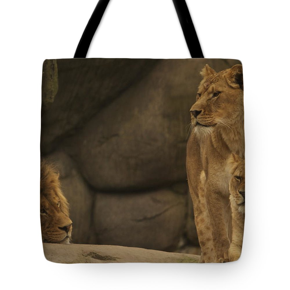 Africa Tote Bag featuring the photograph The King And His Queens by Laddie Halupa