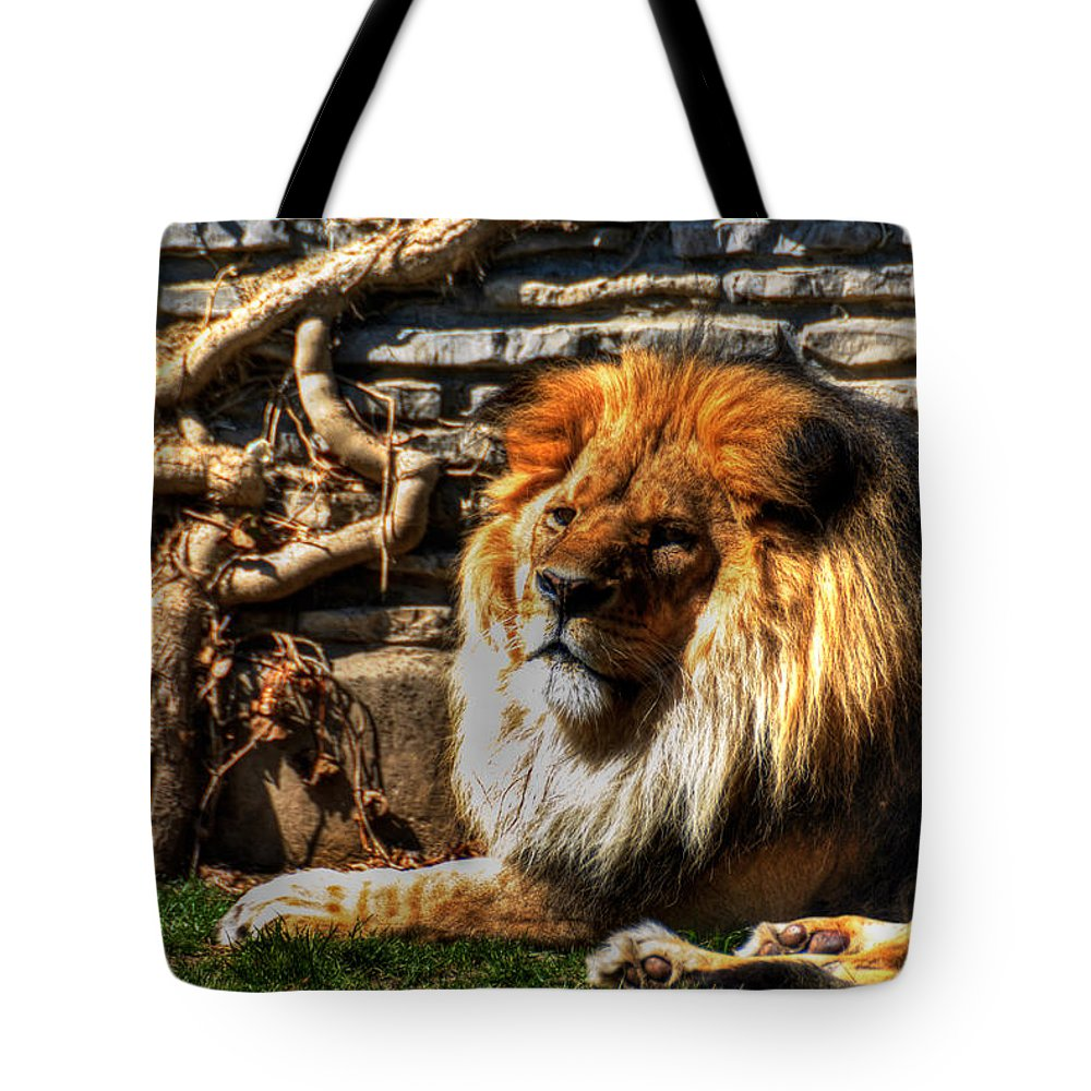 Lion Tote Bag featuring the photograph The King Lazy Boy At The Buffalo Zoo by Michael Frank Jr
