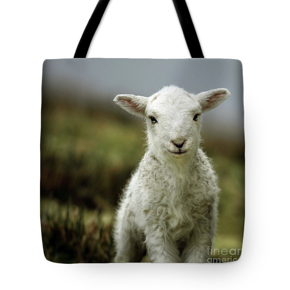 Wales Tote Bag featuring the photograph The Lamb by Angel Ciesniarska