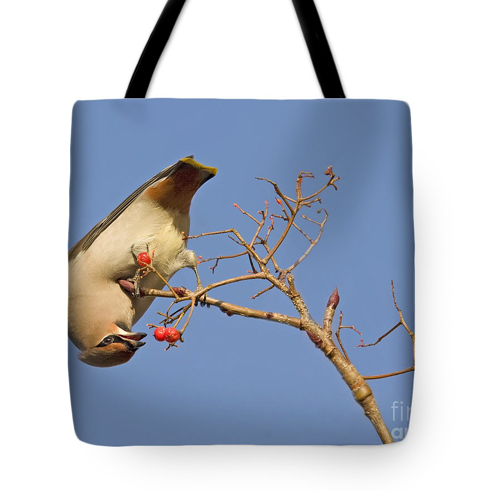 Bird Tote Bag featuring the photograph The Last Berries Are For Me by Liz Leyden