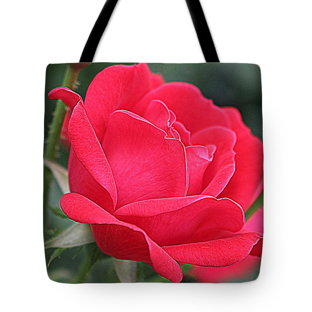 Roses Tote Bag featuring the photograph The Last Rose Of Spring by Dora Sofia Caputo Photographic Design and Fine Art