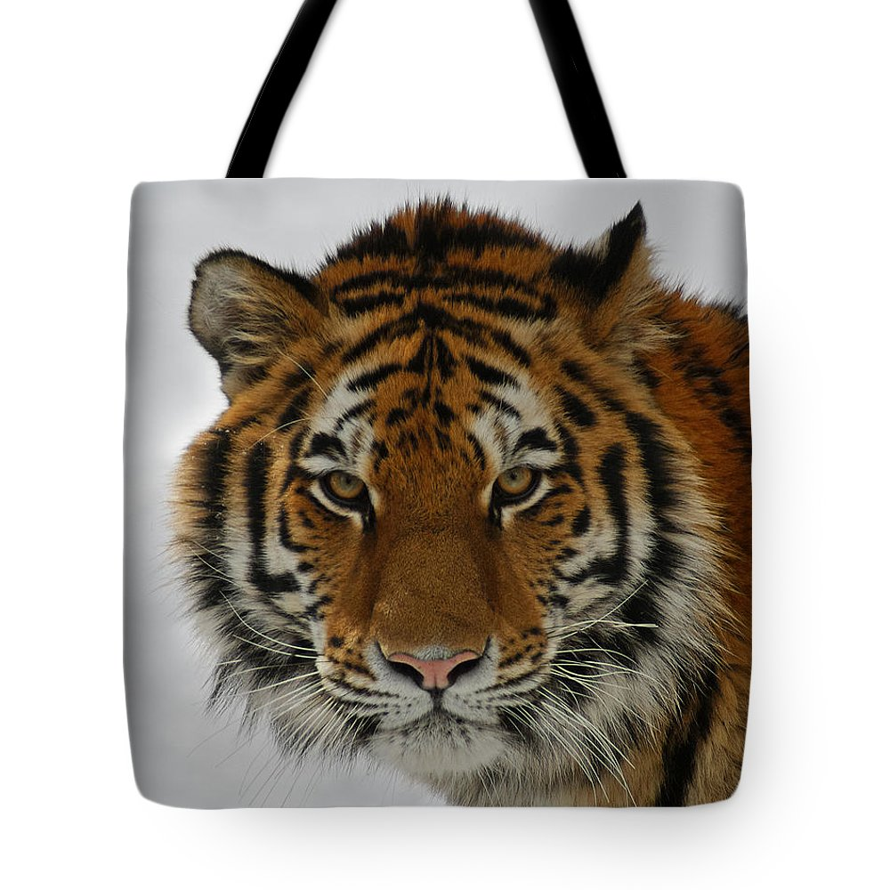 Tiger Tote Bag featuring the photograph The Look by Ernie Echols