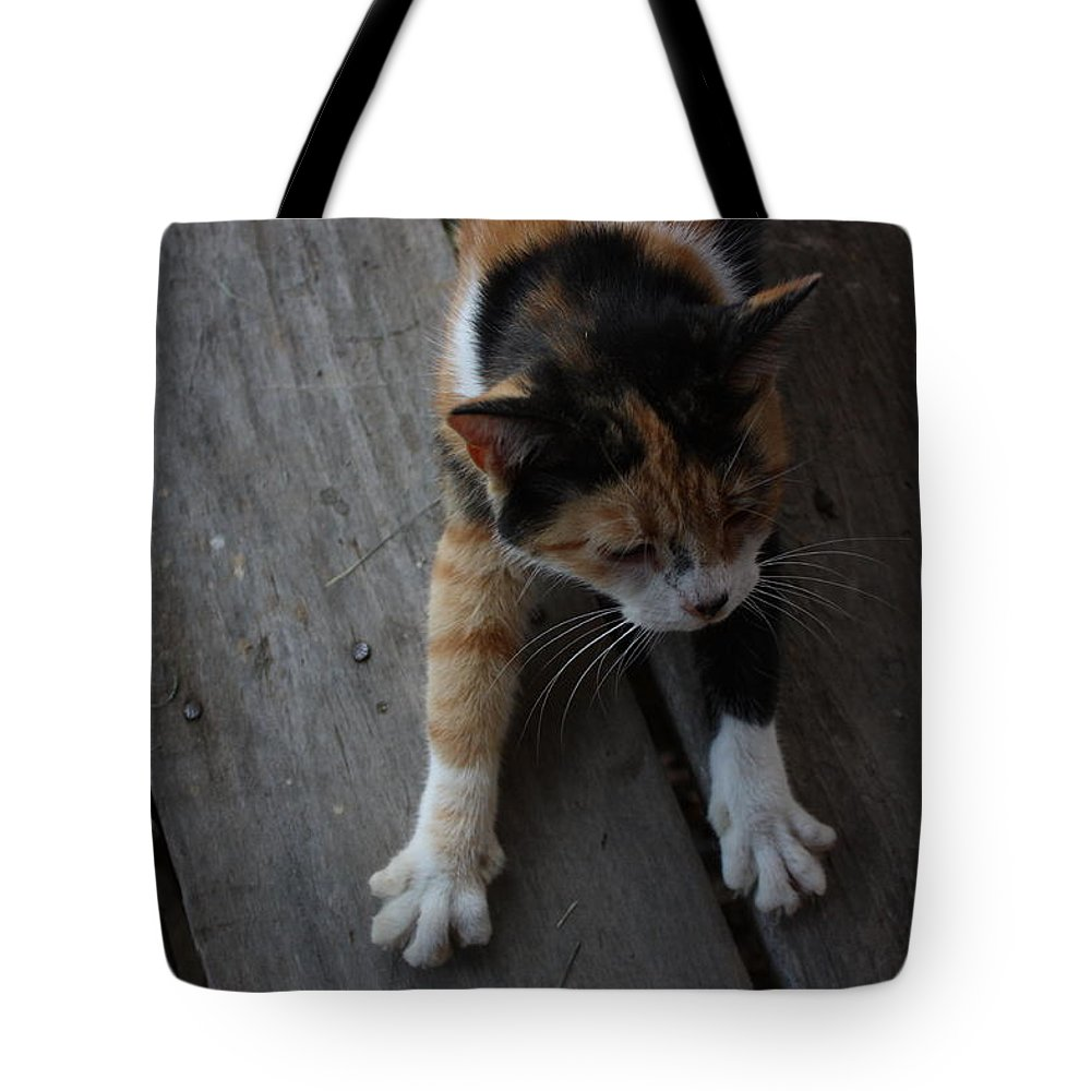 Calico Cat Tote Bag featuring the photograph The Morning Stretch by Josh Brown