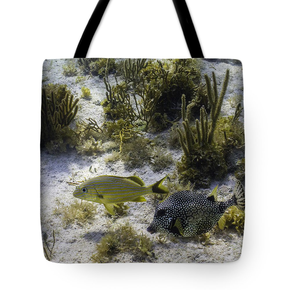Ocean Tote Bag featuring the photograph The Odd Couple by Lynne Browne