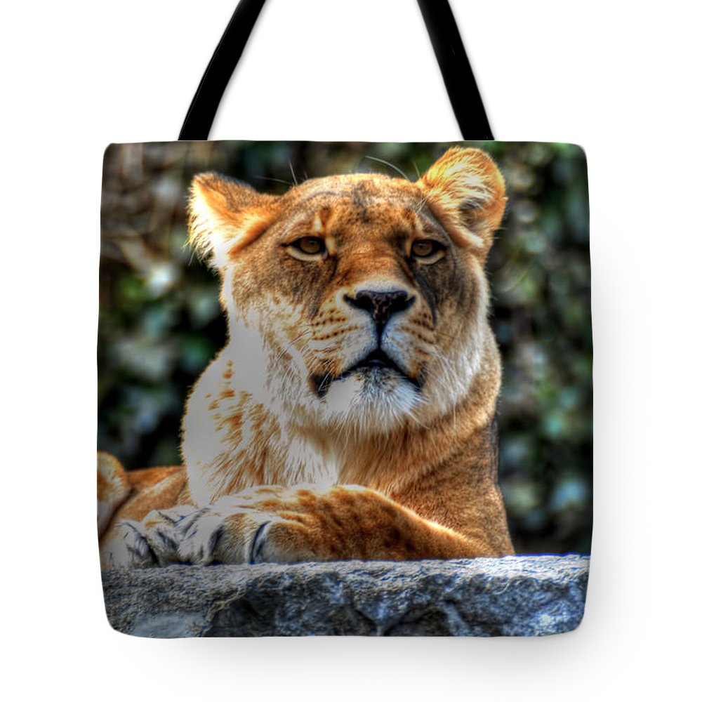 Lion Tote Bag featuring the photograph The Pondering Lioness by Michael Frank Jr