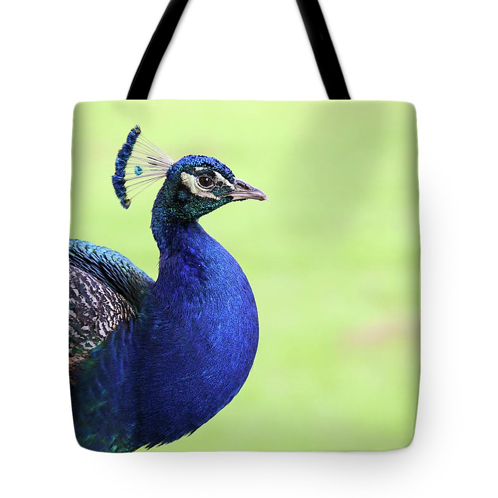 Indian Peafowl Tote Bag featuring the photograph The Profile Shot by Daniela Duncan
