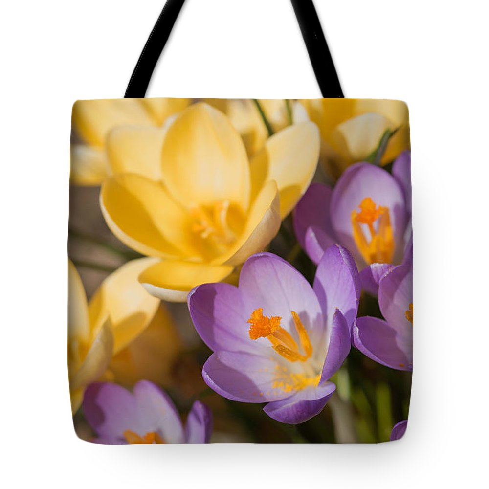 Purple Tote Bag featuring the photograph The Purple And Yellow Crocus Flowers by Jaroslav Frank