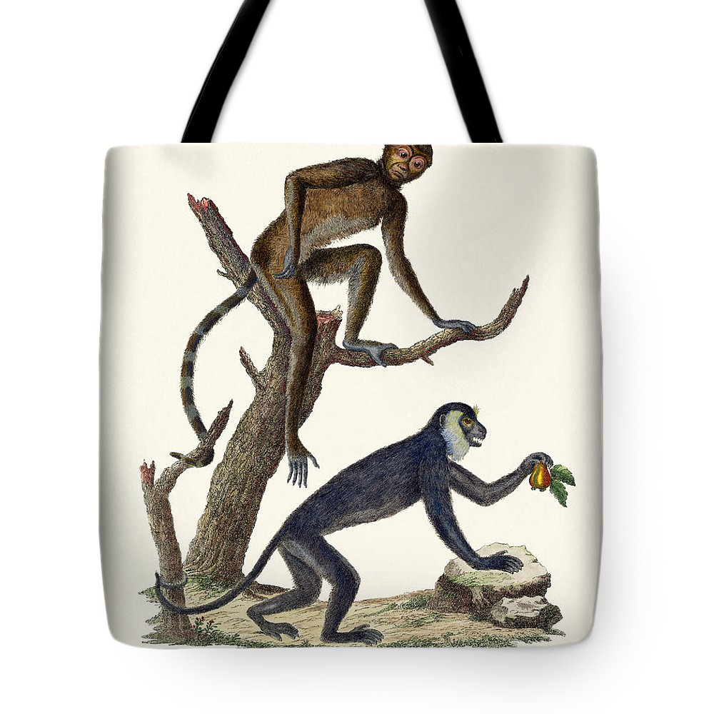 Der Sajou (haubenkapuziner) Tote Bag featuring the drawing The Red Howler Monkey by Splendid Art Prints