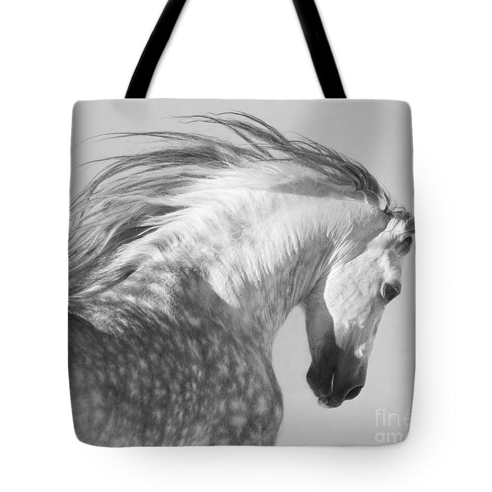 Stallion Lifestyle Products