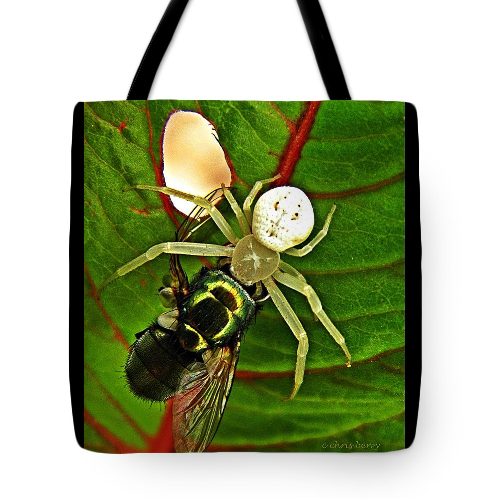 Spider Tote Bag featuring the photograph The Spider And The Fly by Chris Berry
