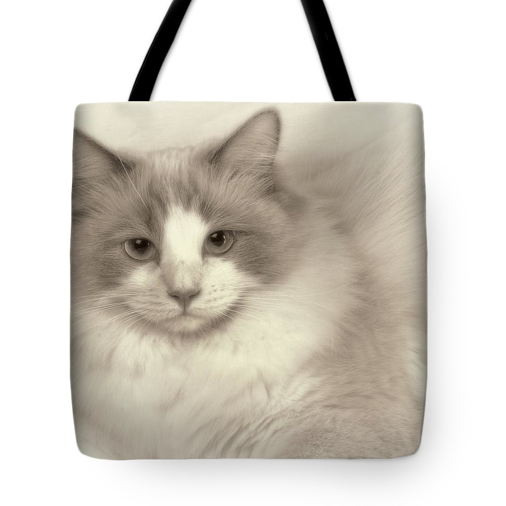 Animal Tote Bag featuring the photograph The Stare by David and Carol Kelly