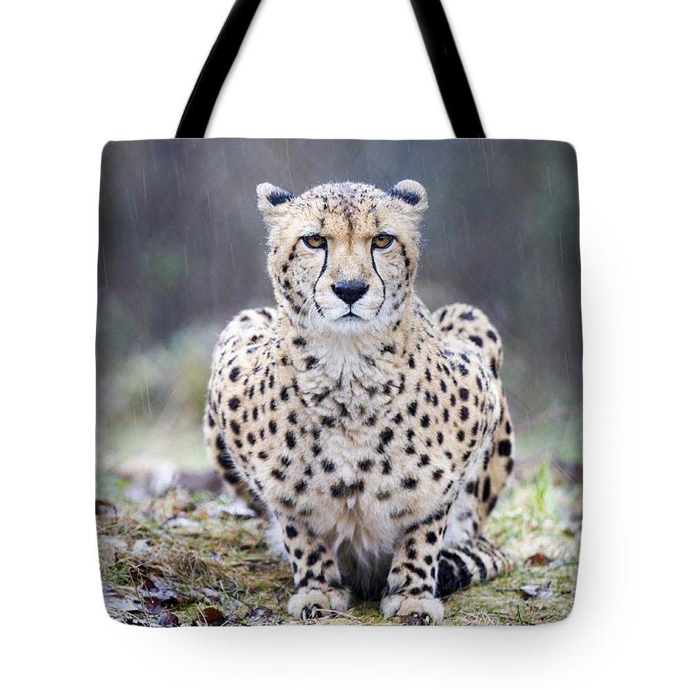 Acinonyx Tote Bag featuring the photograph The Stare by Windy Corduroy
