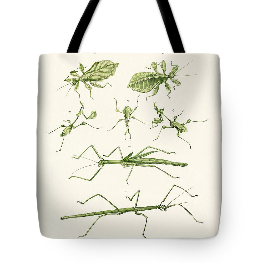 Das Riesengespenst Tote Bag featuring the drawing The Stick Insect by Splendid Art Prints