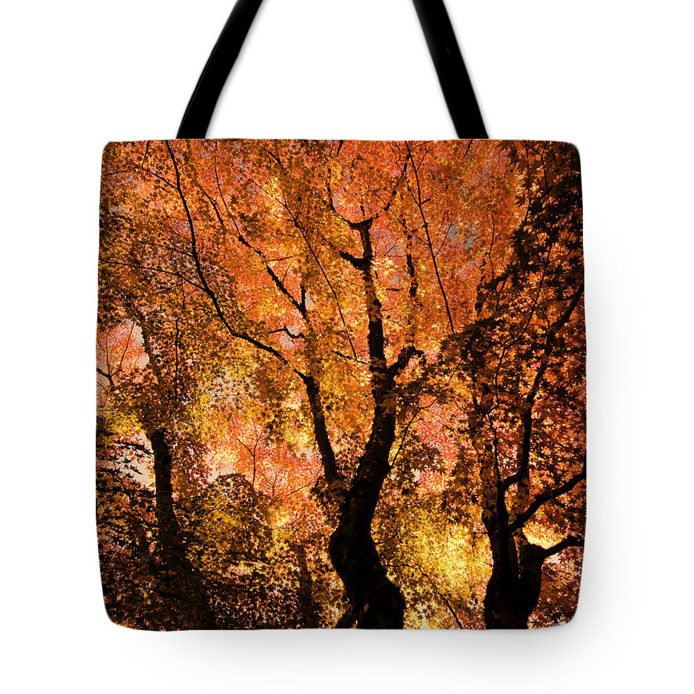 Maple Tote Bag featuring the photograph The Trees Dance As The Sun Smiles by Don Schwartz