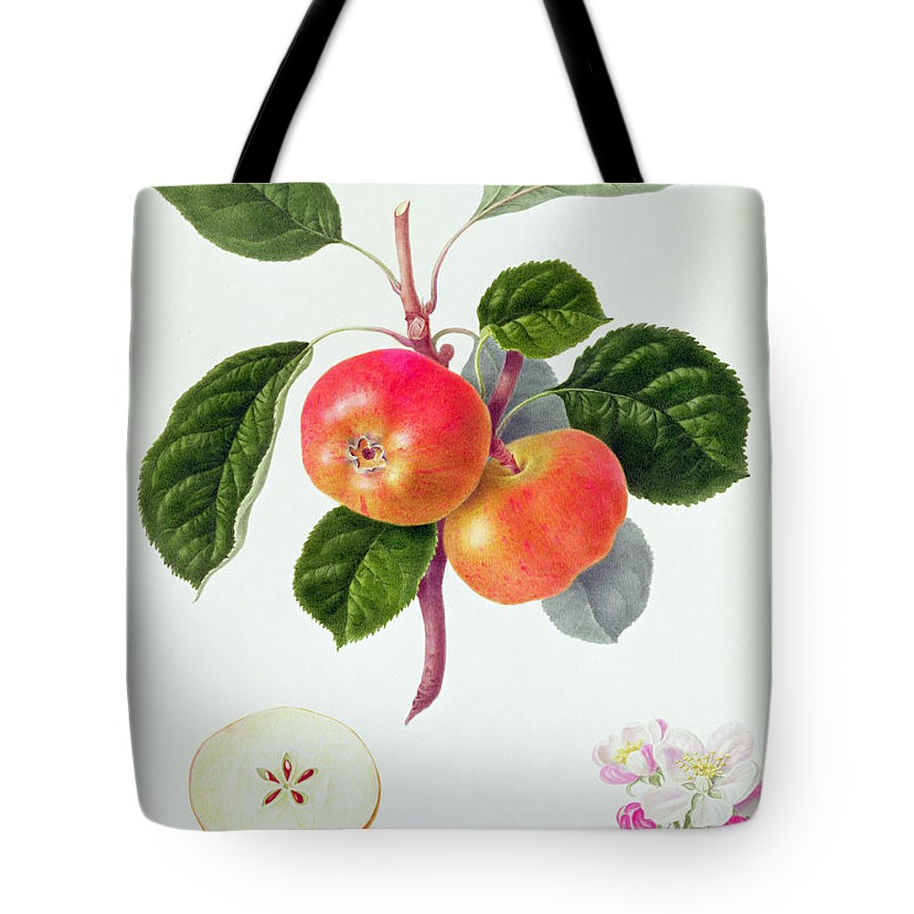 Apple Blossom; Fruit; Apples; Leaves; Branch; Cross-section; Botanical Illustration Tote Bag featuring the painting The Trumpington Apple by William Hooker