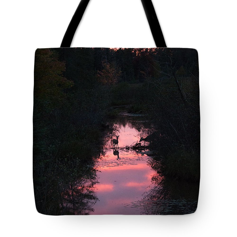 Deer Tote Bag featuring the photograph Then There Are Two by Linda Kerkau
