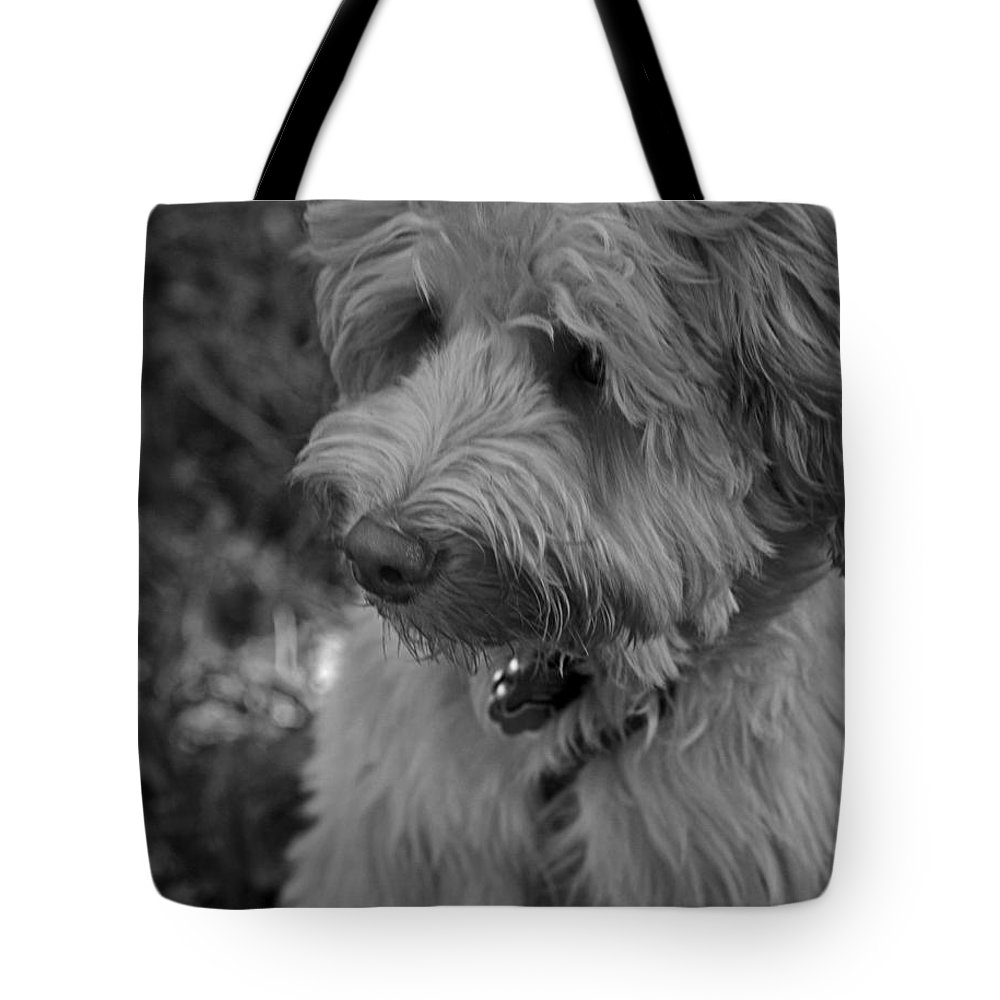 Domestic Tote Bag featuring the photograph Thinking by Sandra Clark