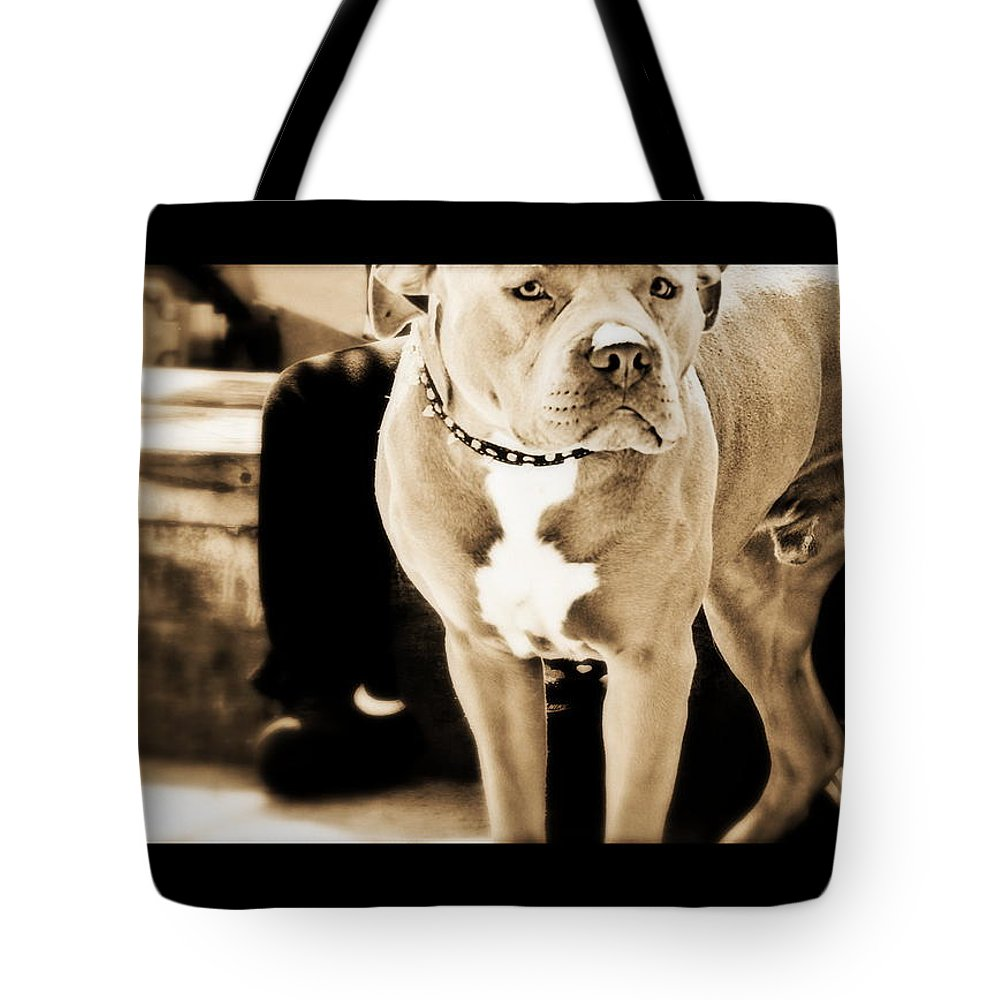 Pit Bull Tote Bag featuring the photograph This Dog Has A Soul by Marysue Ryan