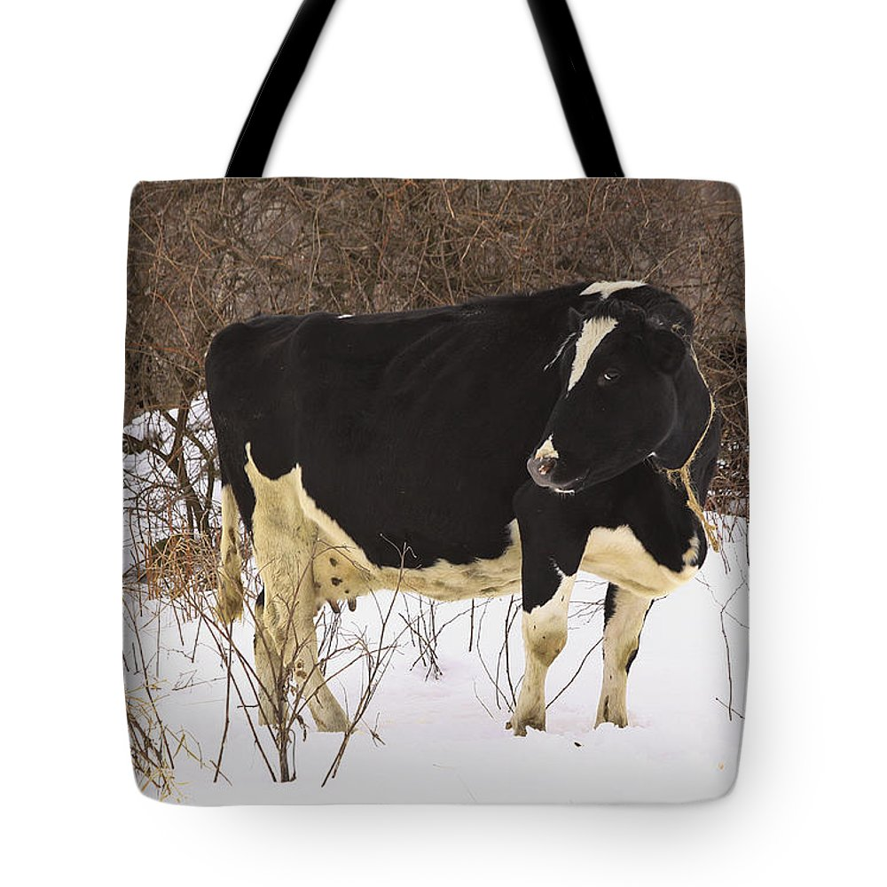 Winter Tote Bag featuring the photograph This Is My Good Side by Deborah Benoit