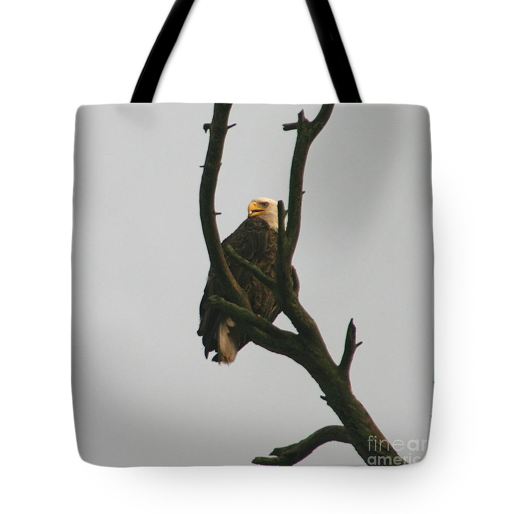 Eagle On Tree Tote Bag featuring the photograph Threatened by Neal Eslinger