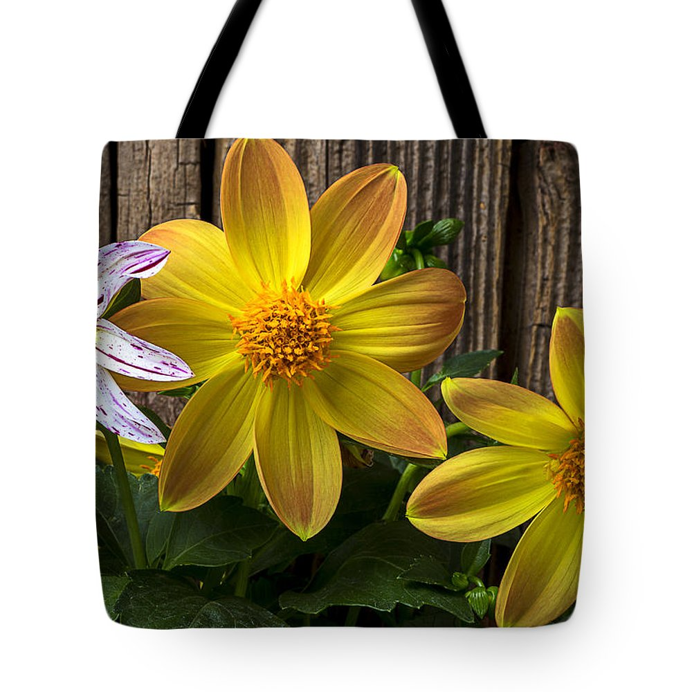Fireworks Dahlia Tote Bag featuring the photograph Three Dahlias by Garry Gay