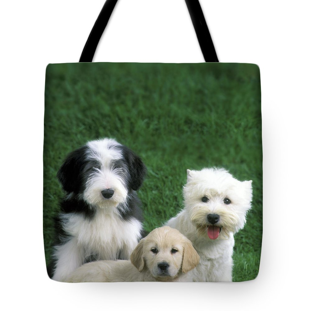 Dogs Tote Bag featuring the photograph Three Diffferent Puppies by Jean-Michel Labat