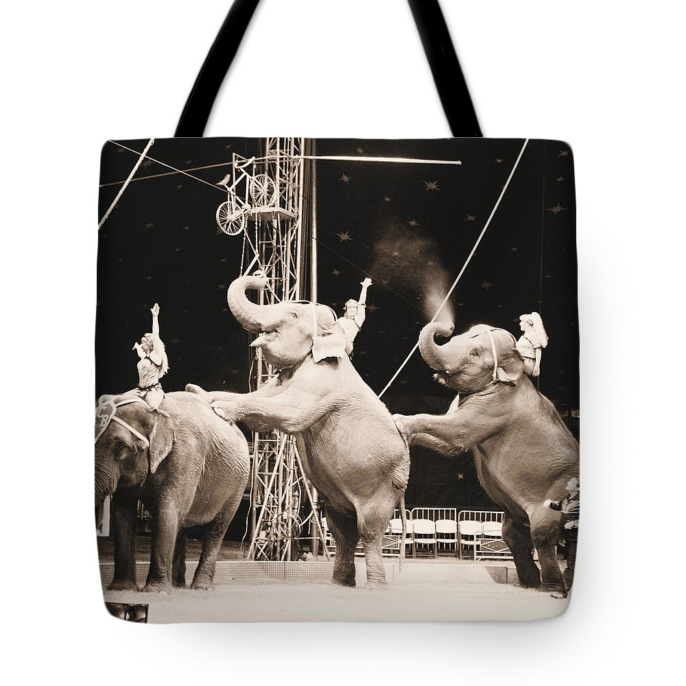 Elephants Tote Bag featuring the photograph Three Elephant Circus Performance by Sally Bauer