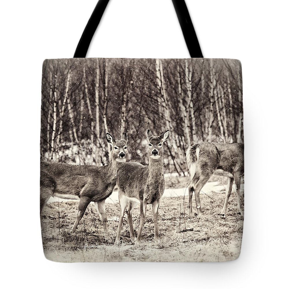 Deer Tote Bag featuring the photograph Three In The Field by Susan Capuano