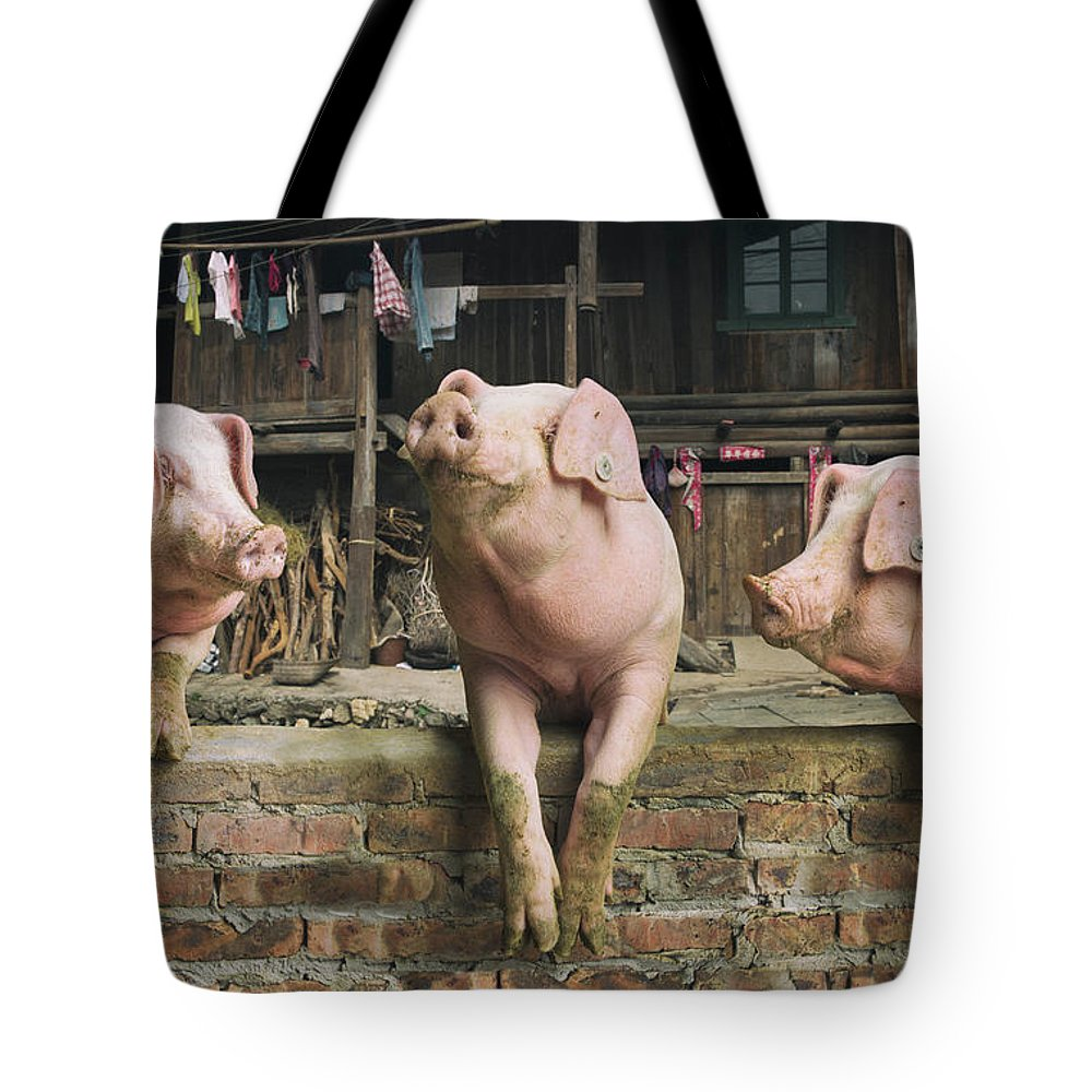 Pig Tote Bag featuring the photograph Three Pigs Having A Chat In A Remote by Mediaproduction