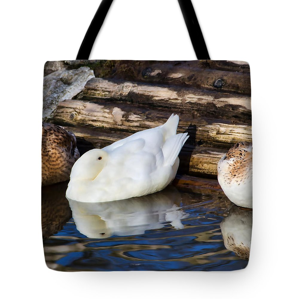 Duck Tote Bag featuring the photograph Three Sleeping Ducks by Susie Peek