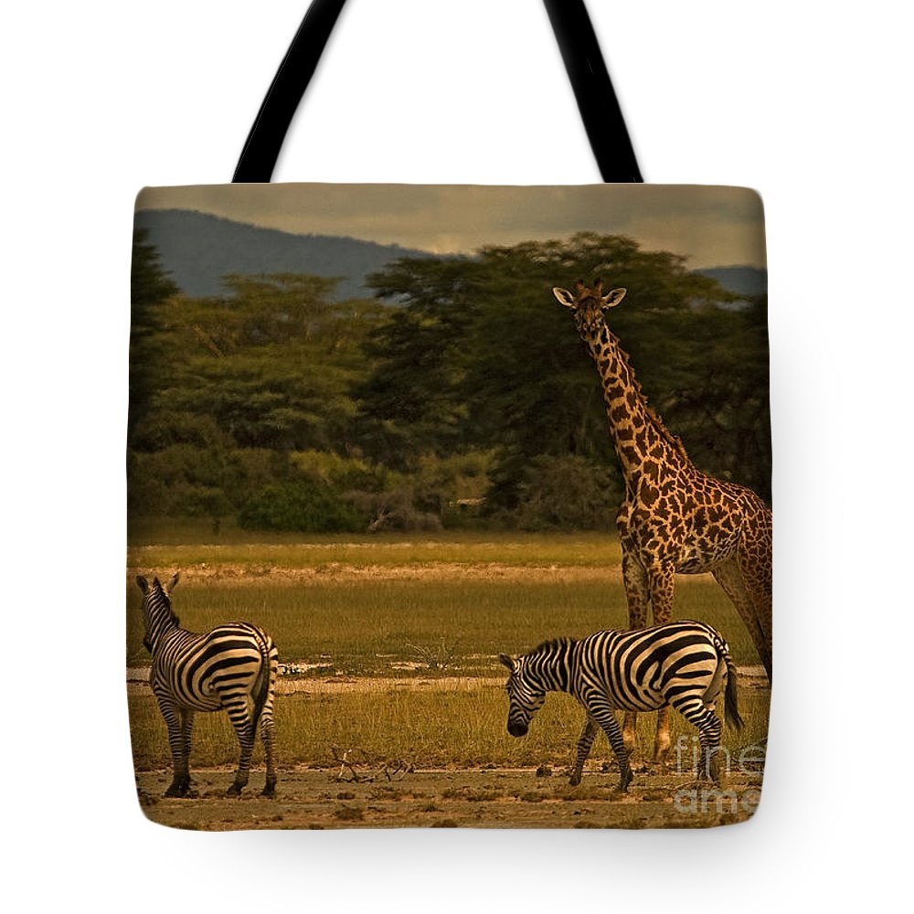 Equus Burchellii Tote Bag featuring the photograph Three Zebras And A Giraffe by J L Woody Wooden