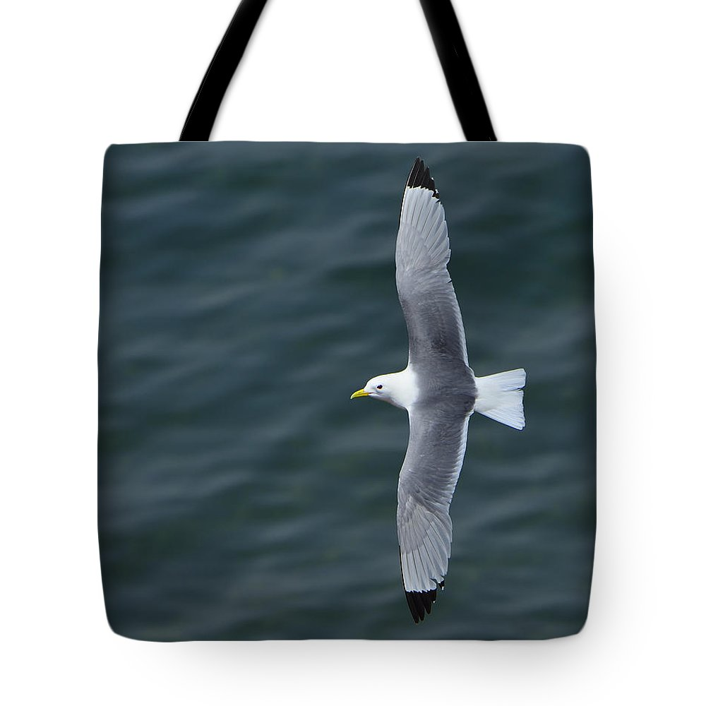 Black-legged Kittiwake Tote Bag featuring the photograph Tickle-ace by Tony Beck