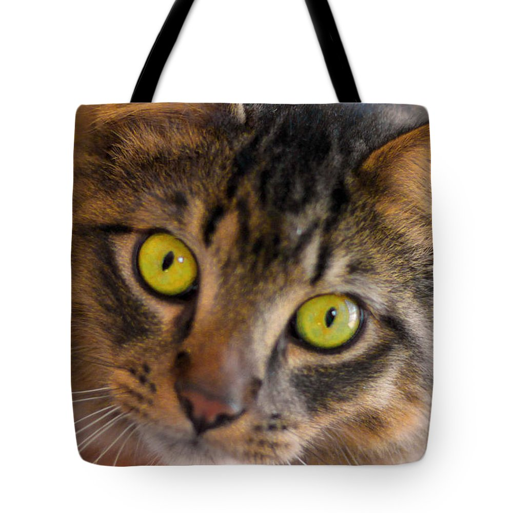 Cat Tote Bag featuring the photograph Tigger's Stare by K Hines
