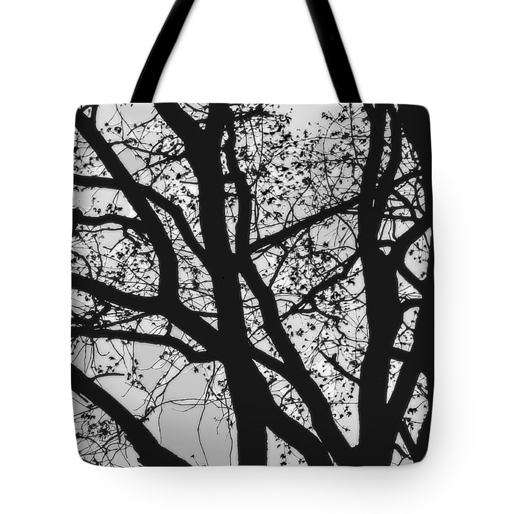 Night Silhouette Tote Bag featuring the photograph Tilia Night Silhouette by Yevgeni Kacnelson