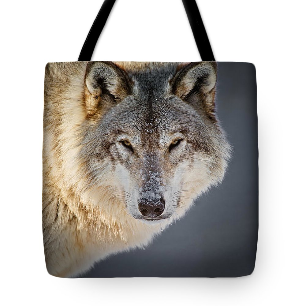 Timber Wolf Tote Bag featuring the photograph Timber Wolf Christmas Card French 21 by Wolves Only