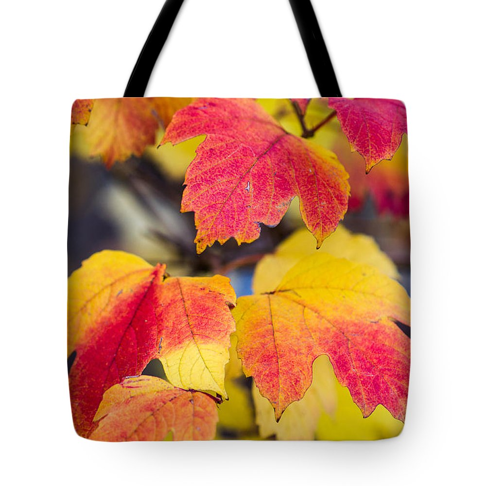Abstract Tote Bag featuring the photograph Toasted Autumn - Featured 3 by Alexander Senin