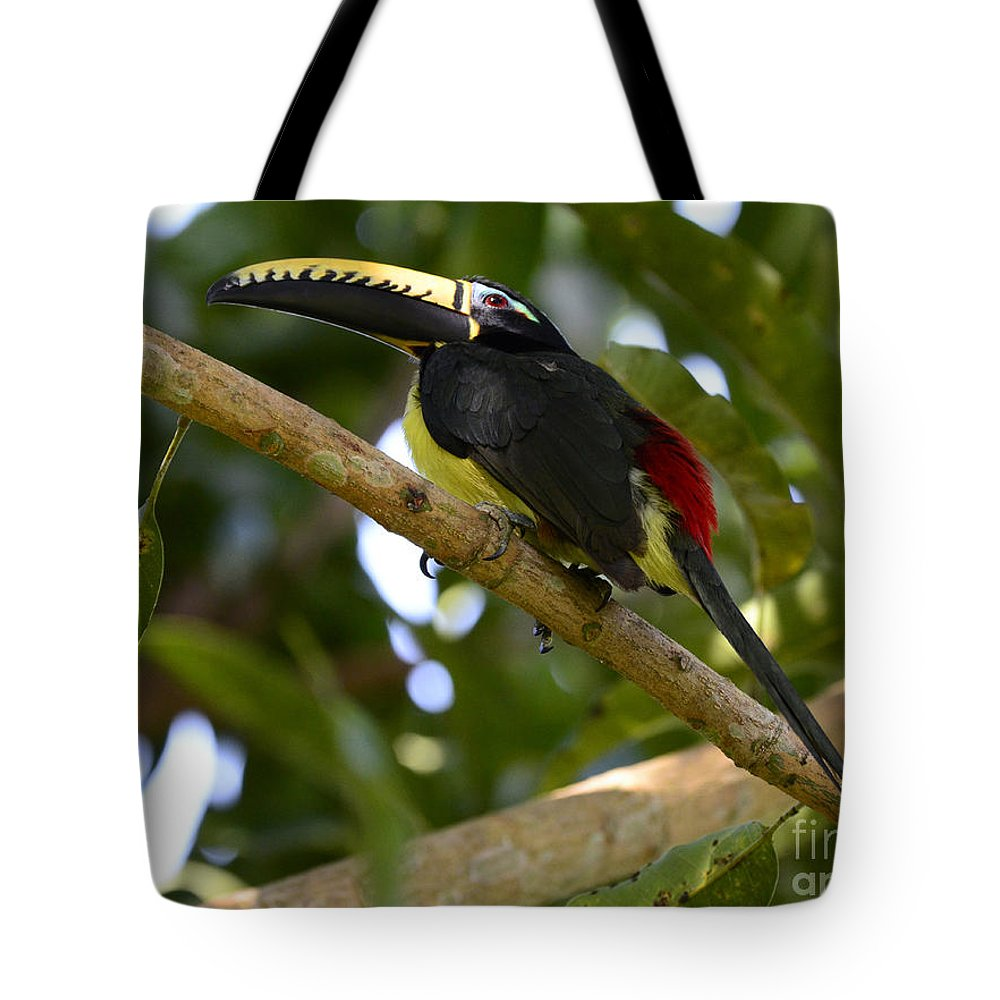 Toucan Tote Bag featuring the photograph Toco Toucan Amazon Jungle Brazil by Bob Christopher