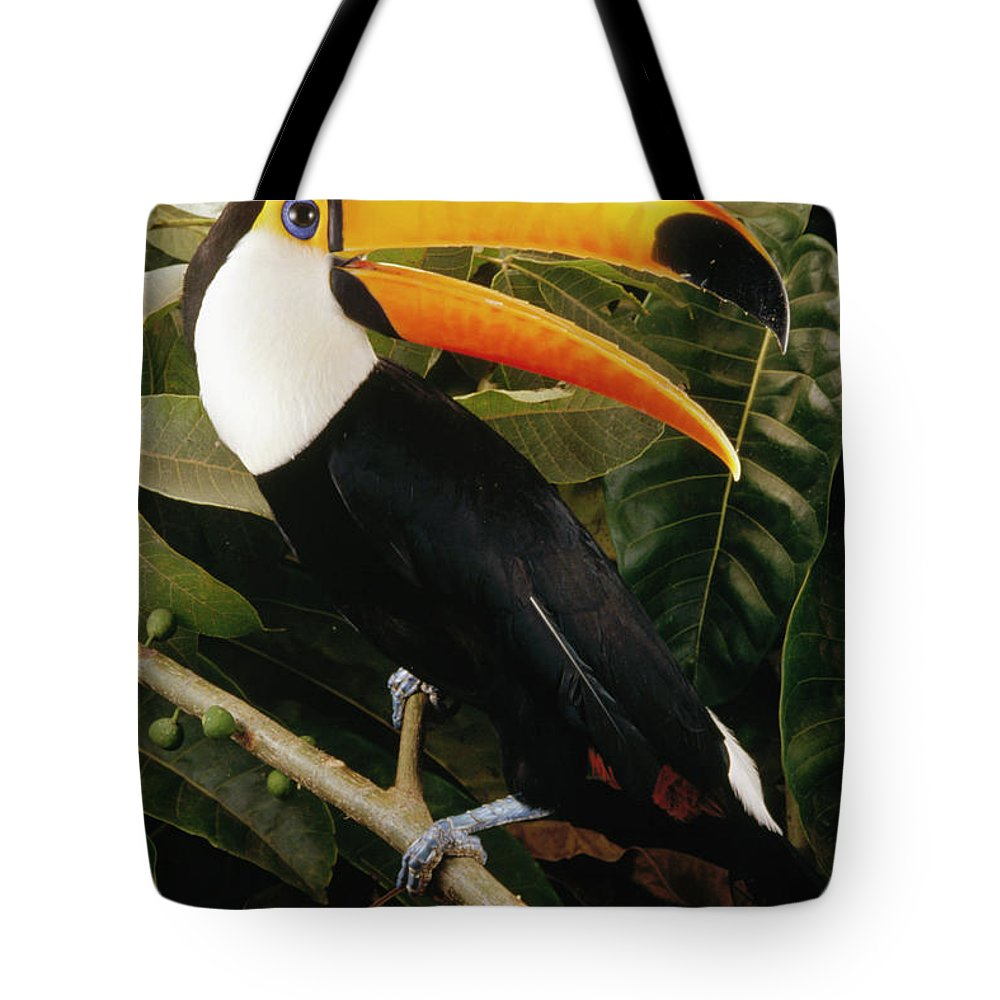 Brazil Tote Bag featuring the photograph Toco Toucan Ramphastos Toco Calling by Claus Meyer